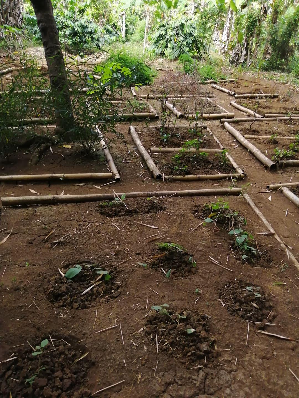 Plantations du Lemuria Land