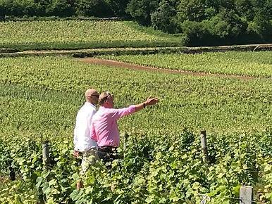 In de wijngaard internet.jpg