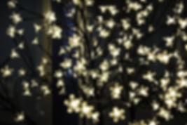 TWINKLE TWINKLE LIGHTS