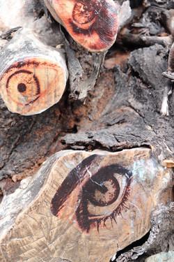 Wenn Bäume Augen tragen