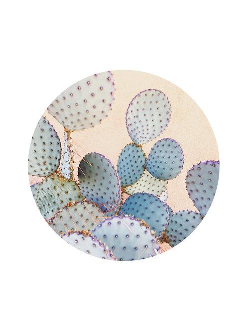Ocean Prickly Pear Card
