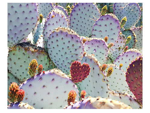 Cacti Love Greeting Card