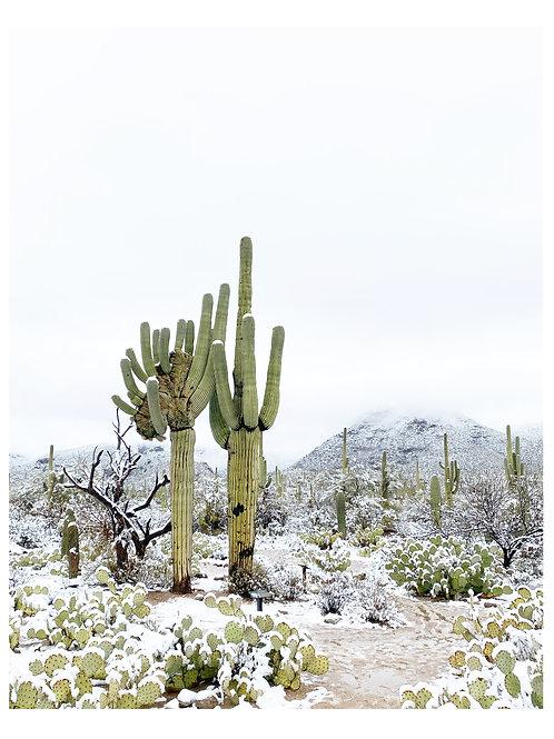 Winter Saguaro