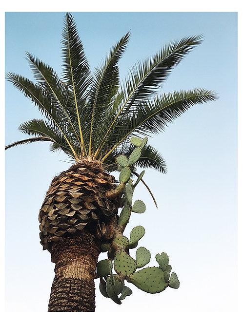 Cactus Palm