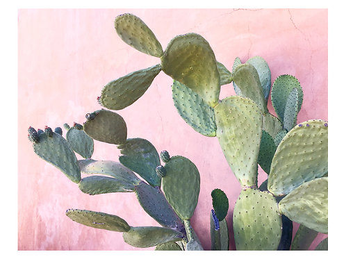 Prickly Pear on Pink Wall