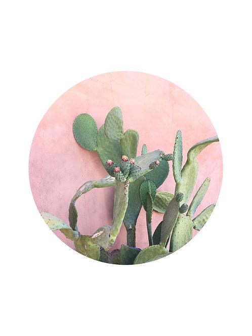 Barrio Prickly Pear Greeting Card