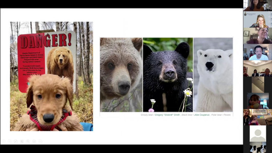 Animals on Arctic Adventures