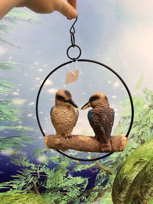 Lovely kookaburra twins in a ring