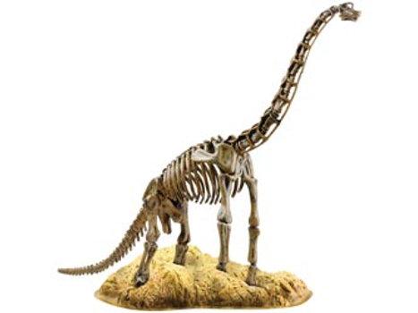 Animal Planet Brachiosaurus Skeleton