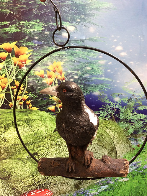 25cm magpie in a ring