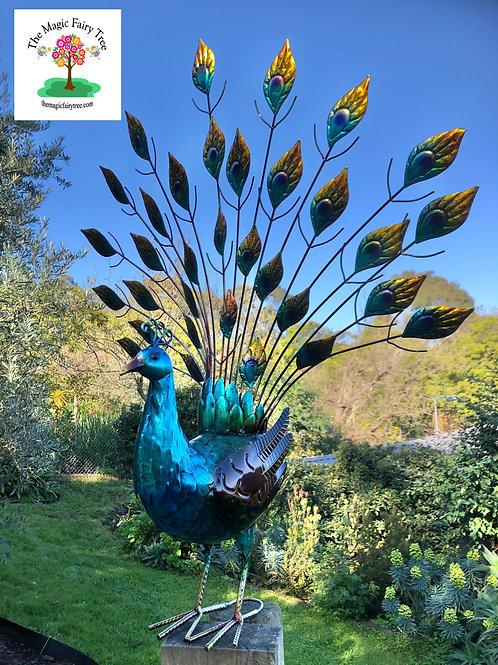 Metal Peacock on Show