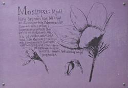 Mosippa (Pulsatilla vernalis)