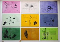Flora från nybro