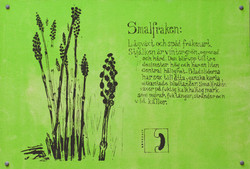 Smalfräken (Equisetum variegatum)