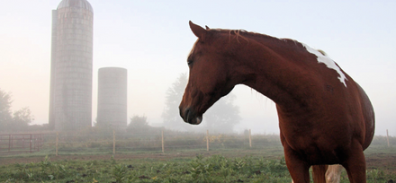 Awen in the morning mist