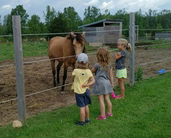 First day of camp, meeting the healing herd