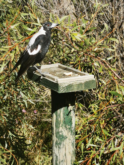 Birds at the cabins