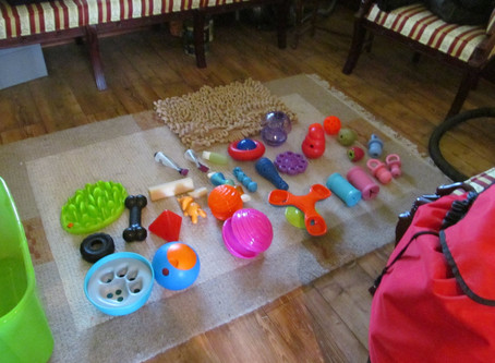 Games For Dogs During COVID Isolation