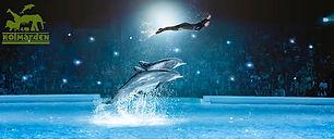 vildmarkshotellet delfinshow.jpg