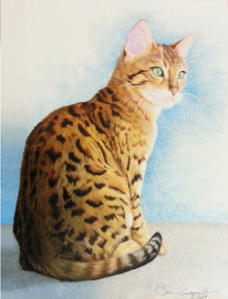 Dylan the Bengal