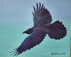Iridescent Raven