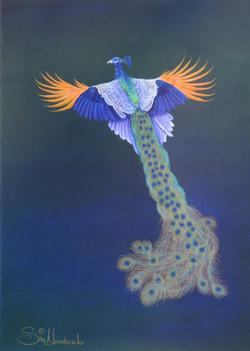 Resplendent Peacock