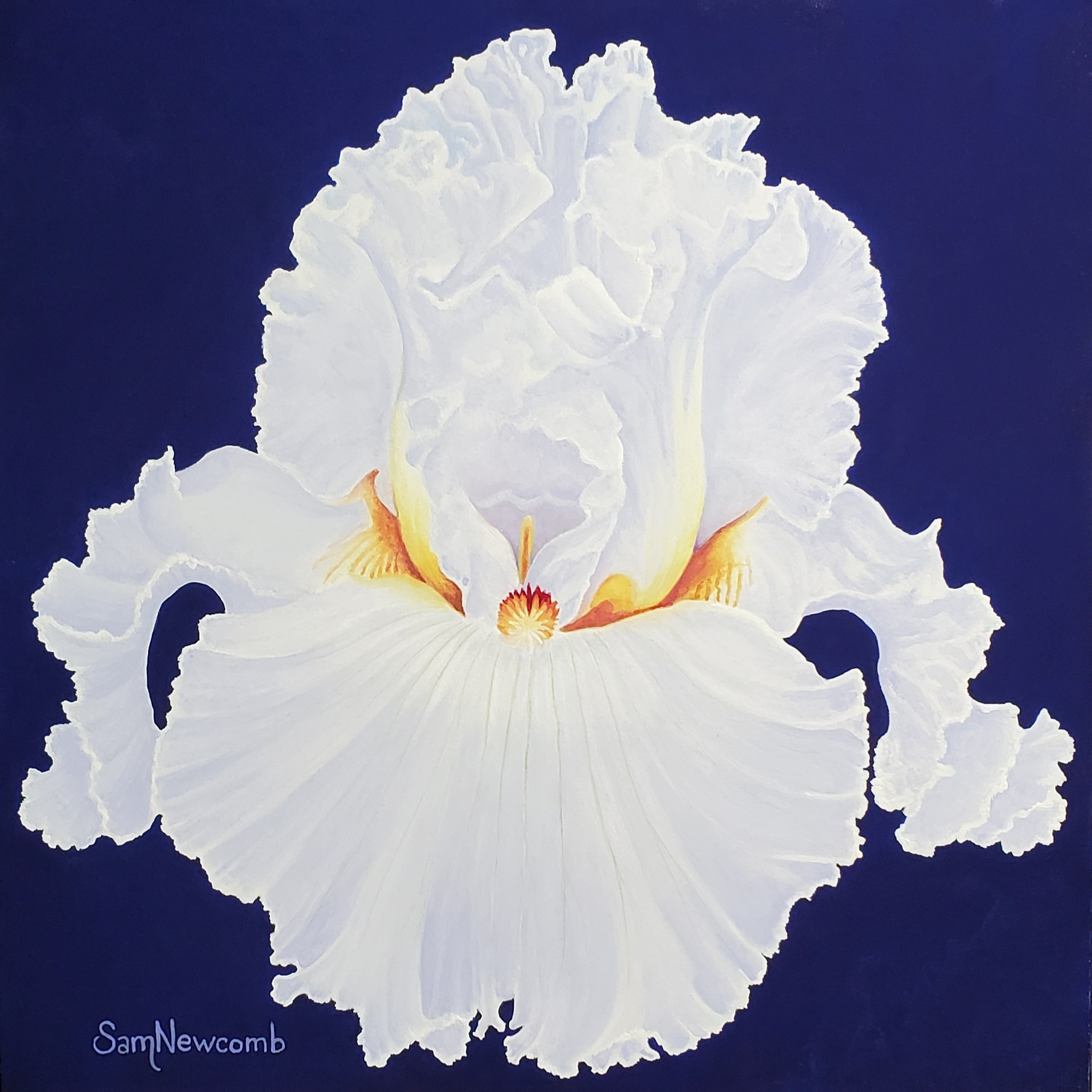 Luminous - White Iris