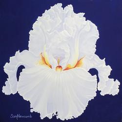 Luminous - White Iris