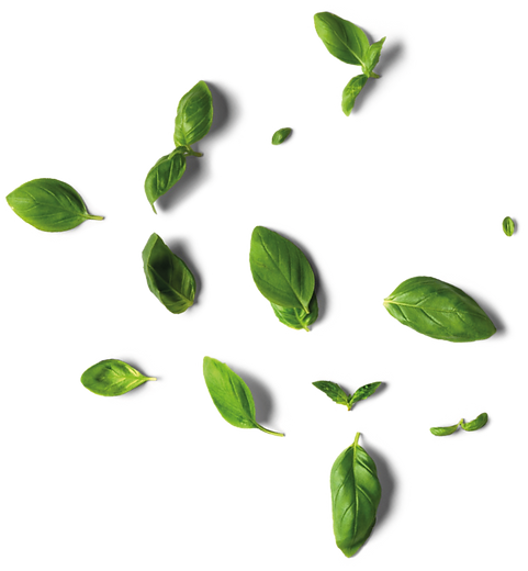 herbs2.png