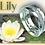 "Thumbnail: ""Lily"""