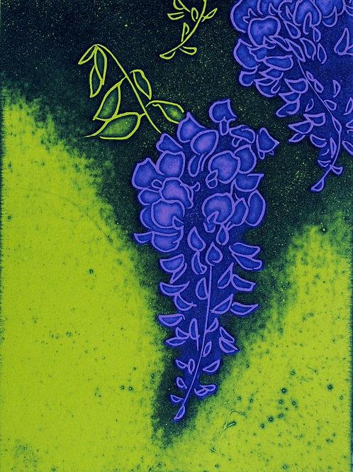 wisteria    A-1
