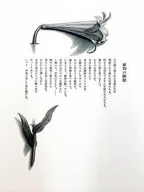 植物の睡眠Ⅰ詩.jpg