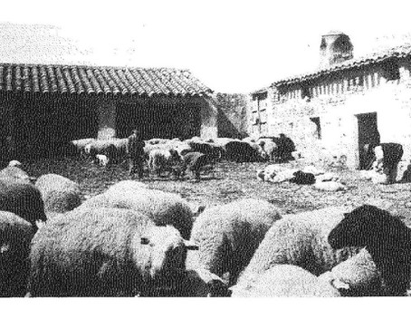 Sector agroalimentario, principal actividad económica del Marqués de Navasequilla en el siglo XX