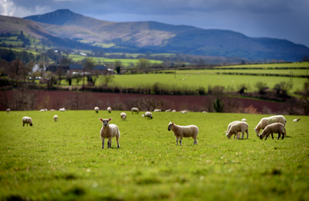 In Wales