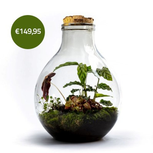 EcoCork XL - Growing Concepts