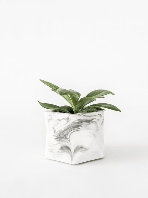 Palua Planter - Medium - dia 5,5cm
