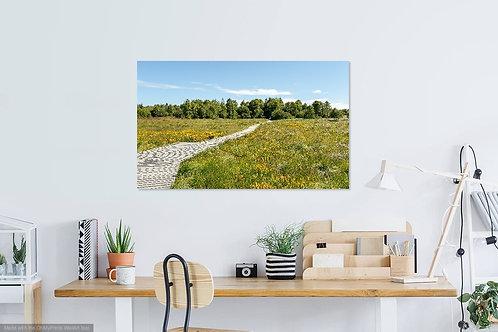 Landscape Hoge Venen I