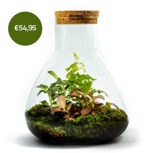 Erlenmeyer Large - Growing Concepts