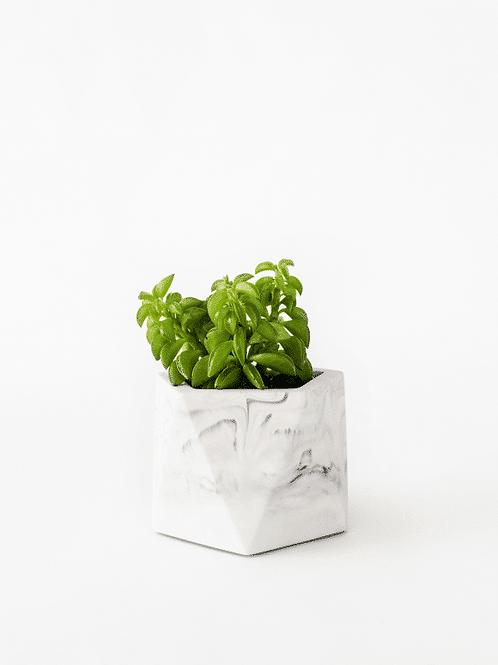 Mare Planter - Medium - dia 5,5cm