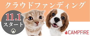 banner-2.png