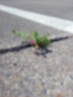 Pionierpflanze-2.jpg