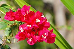 Flora Galore