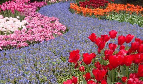 Rios de flores en Keukenhof