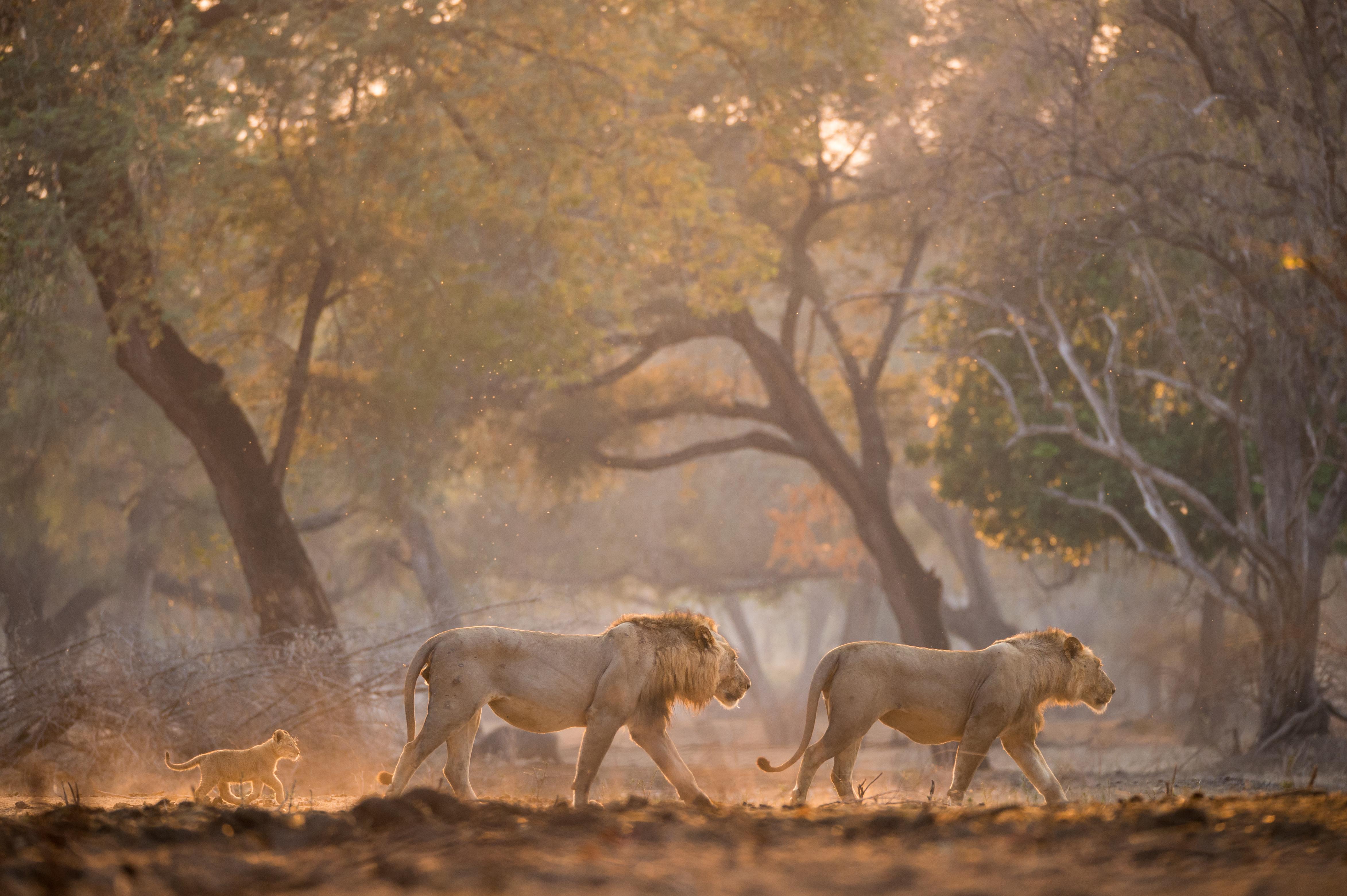 chikwenya_wildlife_hi_res_-_kyle_and_rut