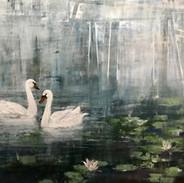 Bucks Swan
