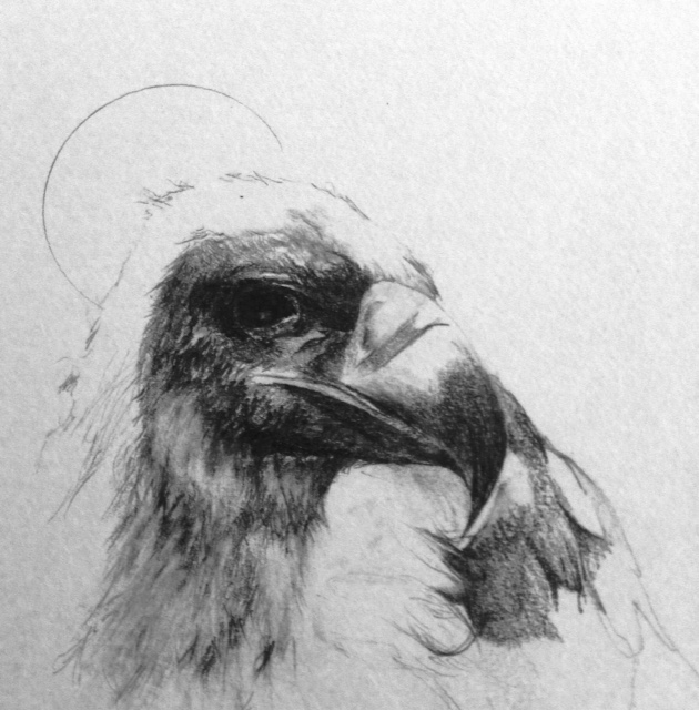 #saintedbirds study