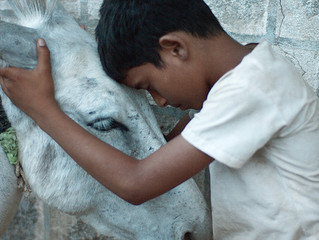Film review: Bhasmasur - A heart-breaking tale about sacrifice and survival