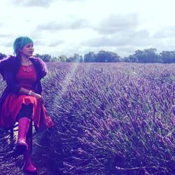mayfower lavender field