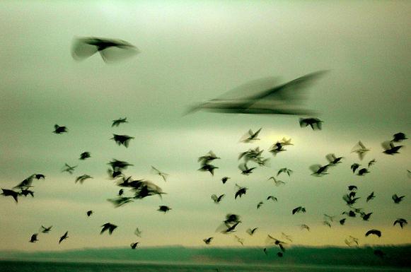 Startled Birds Fly