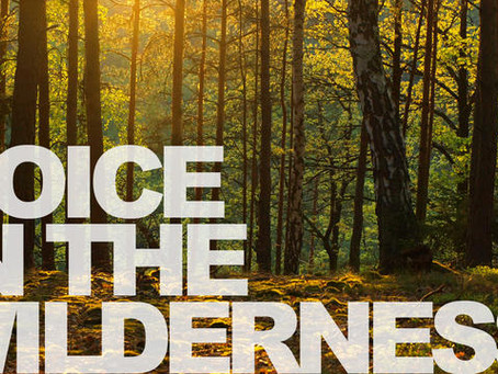 A Voice Is Calling In The Wilderness